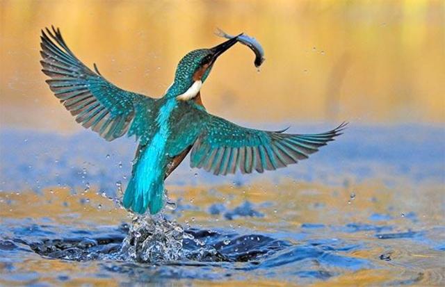 Photo of Dünyanın en güzel 25 kuşu