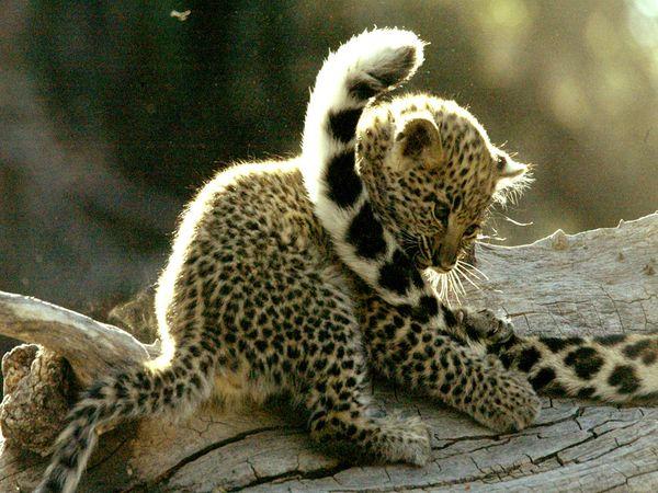 Photo of Bebek hayvanlar Bebek hayvanlar…